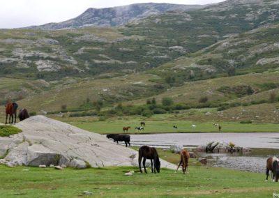 Rencontre avec les chevaux en liberté qui habitent ici. P1320497